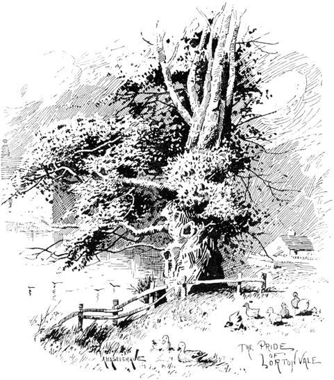 Lorton Yew by Haselgrave in Bogg 1898